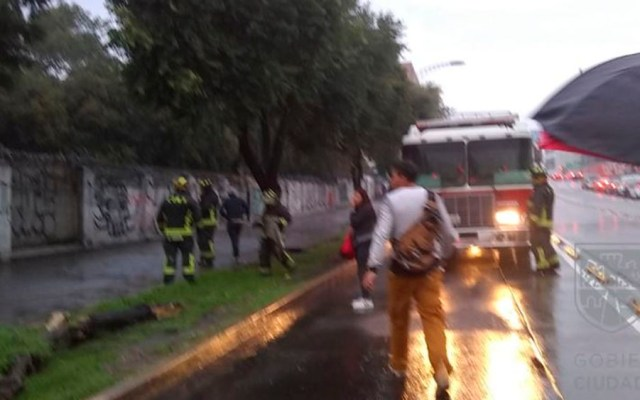 Bomberos retiran árbol caído en avenida Cuauhtémoc - árbol caído Cuauhtémoc