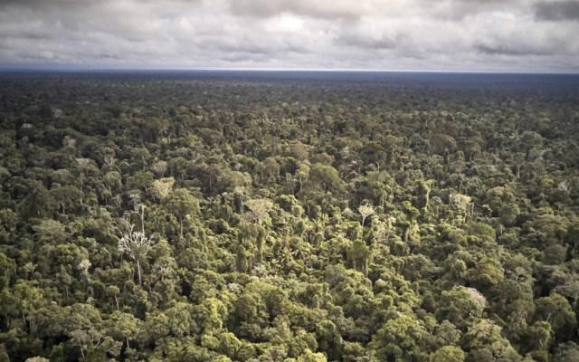 Brasil combate deforestación con policías de élite - Foto de El País