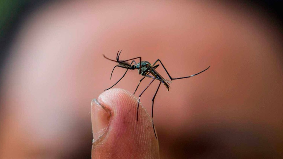 Mueren tres personas por dengue en Tabasco en la última semana - dengue