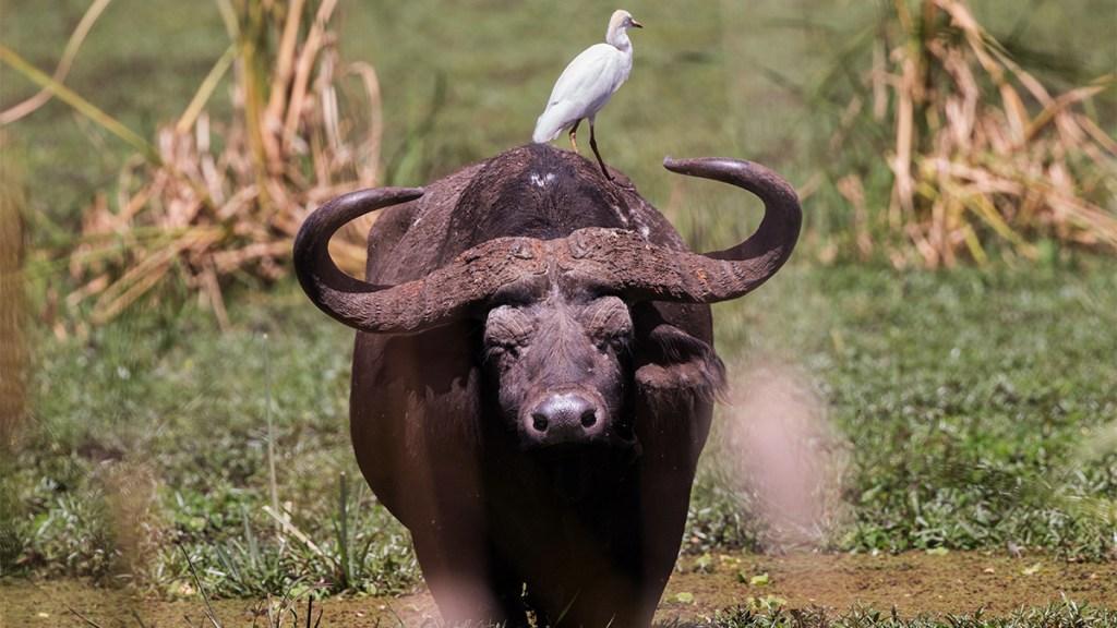 Descubren patrón que determina la longevidad de cada especie - envejecimiento especies animales longevidad