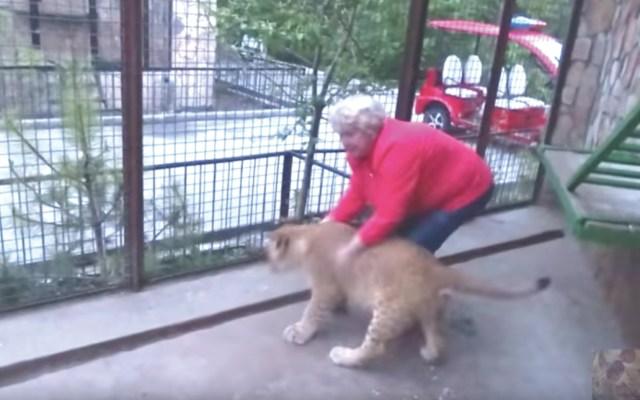#Video Mujer entra a jaula de leones para tomarse fotos - Captura de pantalla