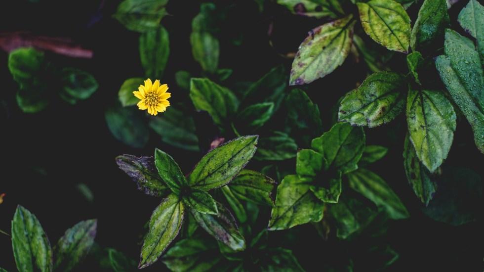 Cambio climático amenaza al 25 por ciento de plantas a nivel mundial - Desde el inicio de la Revolución Industrial, se extinguieron alrededor de 500 especies de plantas. Foto de Paolo Calalang / Unsplash