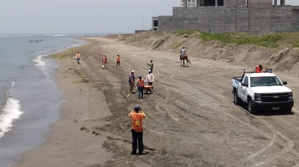Llega sargazo verde a Veracruz - Foto de Quadratín