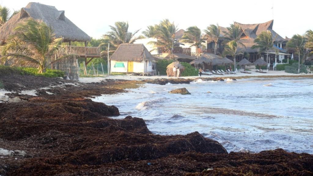 Sargazo podría usarse como combustible para generar electricidad - Sargazo playas costas