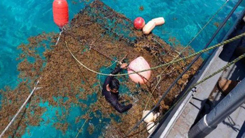 Suman más de 6 mil toneladas de sargazo recolectadas en Quintana Roo en julio - Sargazo Semar Quintana Roo