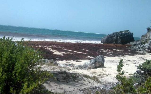 Ofrecerán descuentos ante presencia de sargazo en el Caribe - sargazo