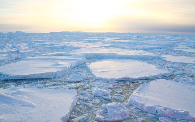 El cambio climático puede causar obesidad y depresión - GRA004 SÍDNEY (AUSTRALIA), 31/07/2013.- Fotografía facilitada por la Universidad de Nueva Gales del Sur. Un tercio de la biodiversidad de los lechos marinos polares están amenazados por la desaparición como consecuencia del cambio climático. La pérdida progresiva de las banquisas polares podría tener unos resultados nefastos para el ecosistema de las regiones polares al permitir una mayor penetración de los rayos solares en el lecho marino, apunta la investigación liderada por Graeme Clark, de la mencionada universidad. EFE/Graeme Clark Photograph