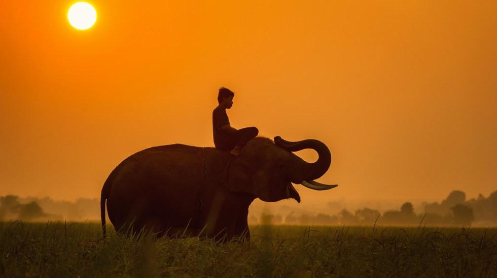 ¿De dónde viene la expresión 'elefante blanco'? - Foto de Pixabay.