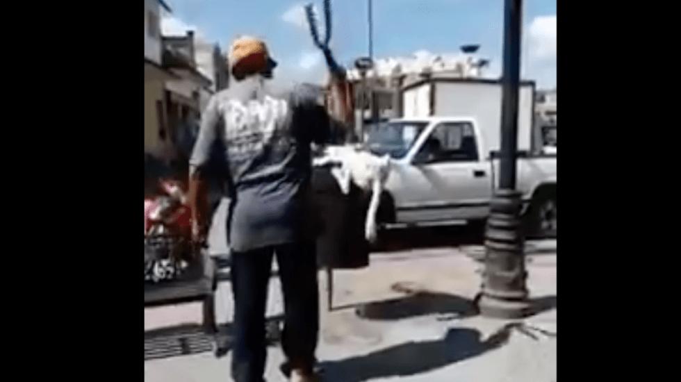#Video Hombre corta cola a perro con tijeras de podar - Captura de pantalla
