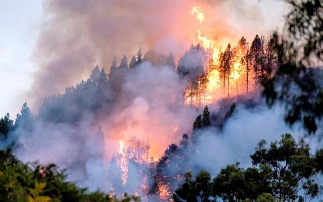 Incendio deja 9 mil personas evacuadas en Gran Canaria - incendio gran canaria