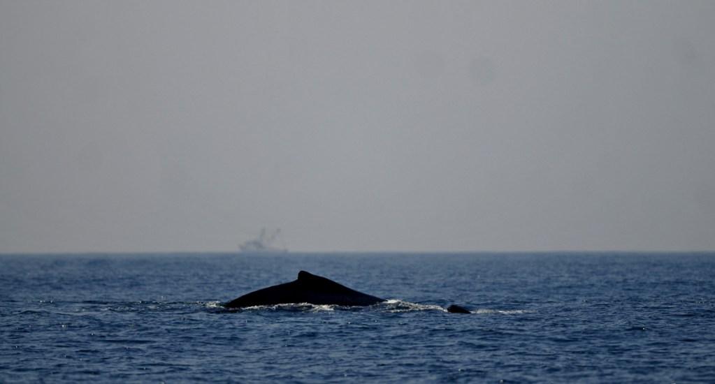Episodios de altas temperaturas oceánicas ocurren con más frecuencia - Foto de EFE