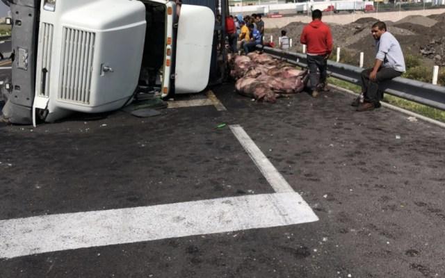 Tráiler con cerdos vuelca en Circuito Exterior Mexiquense - Foto de Hoy Estado