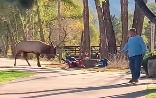 #Video Alce ataca a mujer en parque de Colorado - Foto de Daily Mail