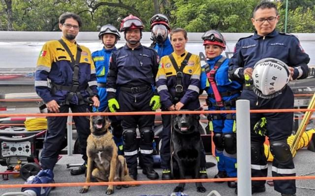 Binomios caninos de la UNAM participan en el Desfile Militar - binomios caninos unam desfile militar