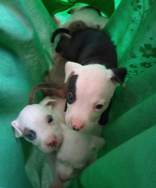 Cachorros rescatados. Foto de Corazones Callejeros A.C.