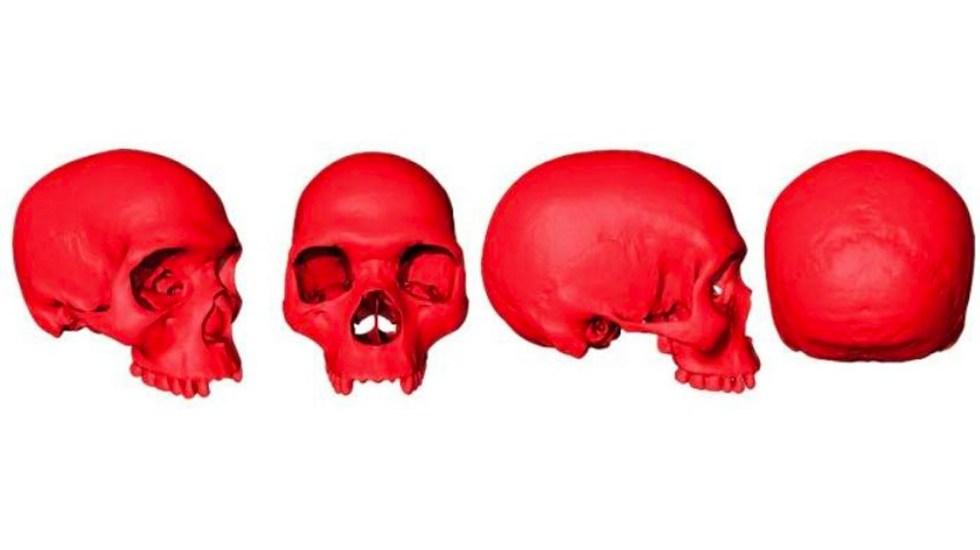 Reconstruyen virtualmente cráneo del ancestro del Homo Sapiens - Cráneo Homo Sapiens