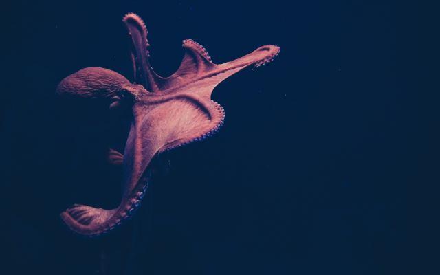 Un ser que parece extraterrestre - Photo by Isabel Galvez on Unsplash