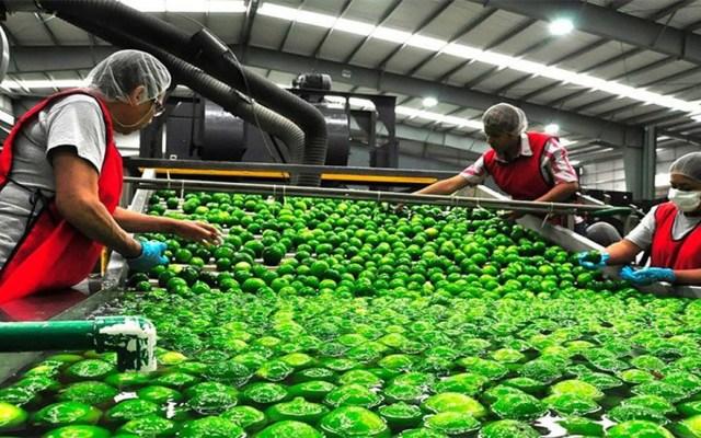 Actividad Económica disminuyó 0.1 por ciento en julio - Mujeres trabajando. Foto Especial