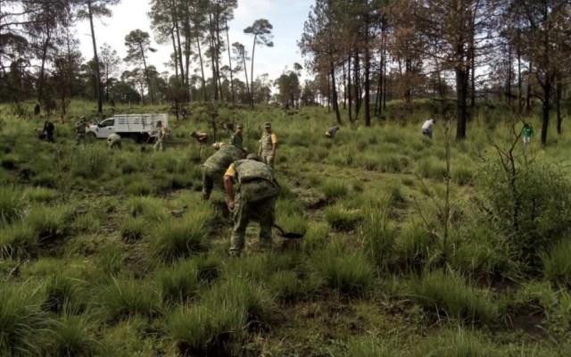 Guardia Nacional y Sedena reforestan y combaten tala ilegal en el Ajusco - Foto de @SEDENAmx