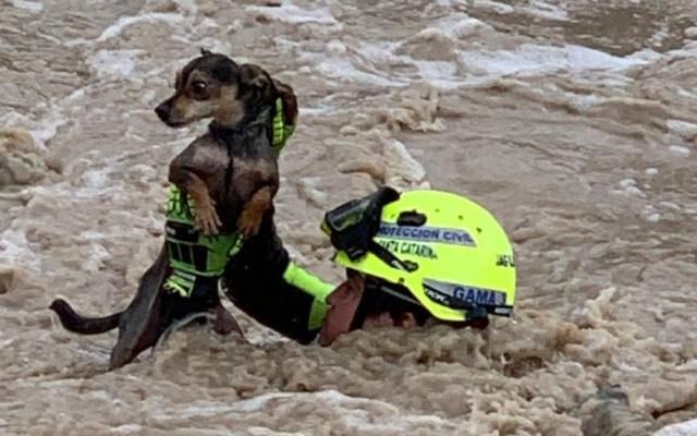 #Video Rescatan a hombre y su perro en río de Nuevo León - Rescate de perrito en río Santa Catarina. Foto de @stacatarinagob