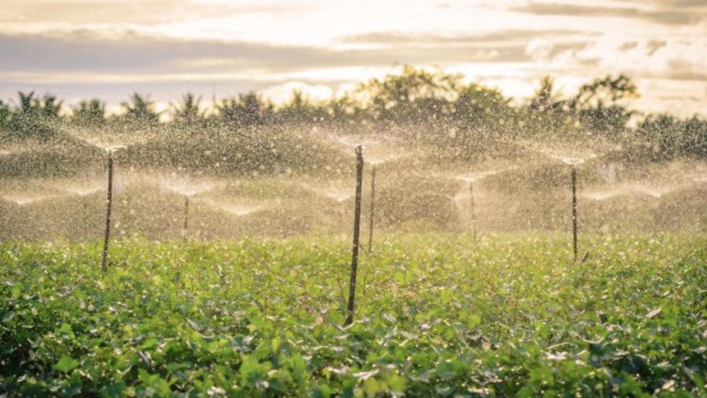 Prohibición del glifosato en México abre conflicto con empresarios del campo - Campo de cultivo en México. Foto de @NoticiaCongreso