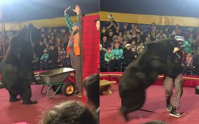 #Video Oso ataca a su entrenador en pleno show - Ataque de oso en circo de Rusia. Captura de pantalla