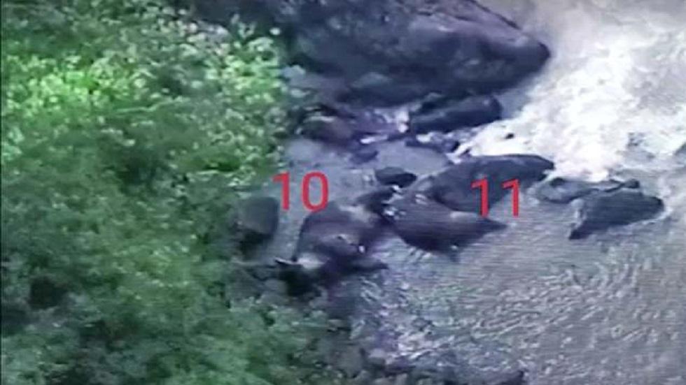 Hallan cadáveres de otros cinco elefantes en cascada de Tailandia - Cadáveres de elefantes en cascada de Tailandia. Foto de Parque Nacional Khao Yai