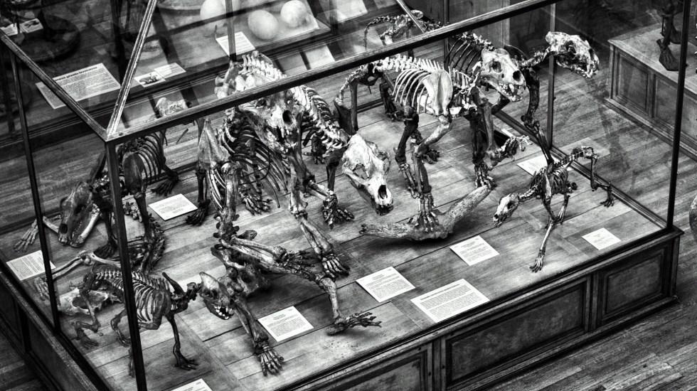 Hallan fósiles que revelan pistas sobre los años después de la gran extinción - dinosaurios museo fósil