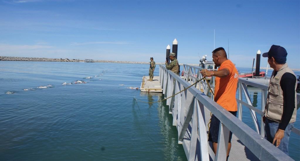 Vigilan Golfo de California para evitar pesca de vaquita marina - Foto de Profepa