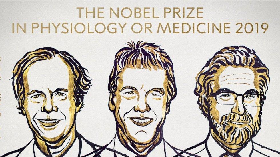Nobel de Medicina a dos estadounidenses y un británico por estudiar a las células y su necesidad de oxígeno - Los ganadores del Nobel de Medicina. Foto de @NobelPrize
