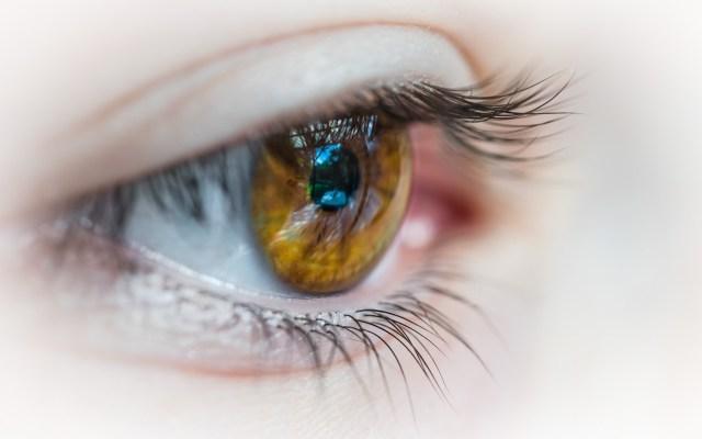 IMSS emite recomendaciones para prevenir síndrome de ojo seco - Foto de Patrick Brinksma / Unsplash