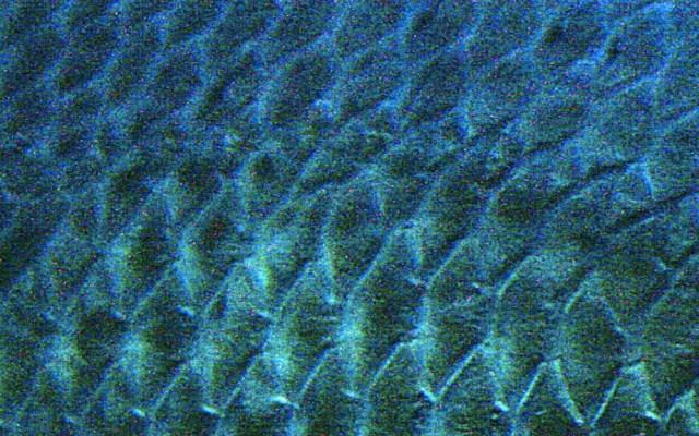Pez gigante de la Amazonia tiene escamas que resisten mordidas de pirañas - Pez escamas