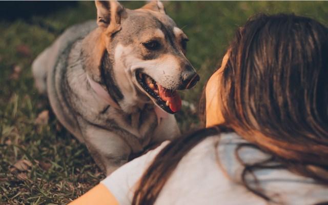 Besar a mascotas podría afectar el hígado y los pulmones - Besar a las mascotas. Foto de Manuel Meza / Unsplash