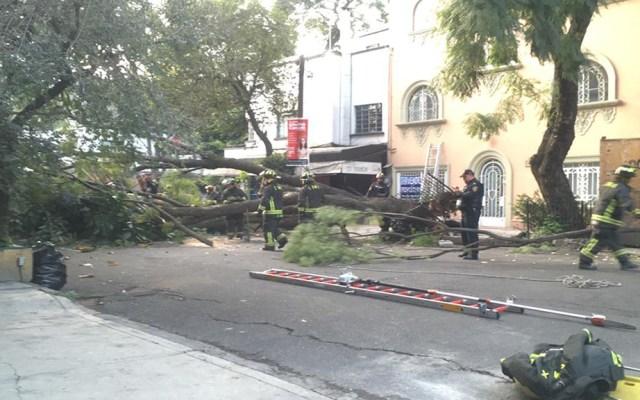 Activan Alerta Amarilla en la Ciudad de México por vientos fuertes - Caída de árbol en la colonia Condesa. Foto de @vialhermes