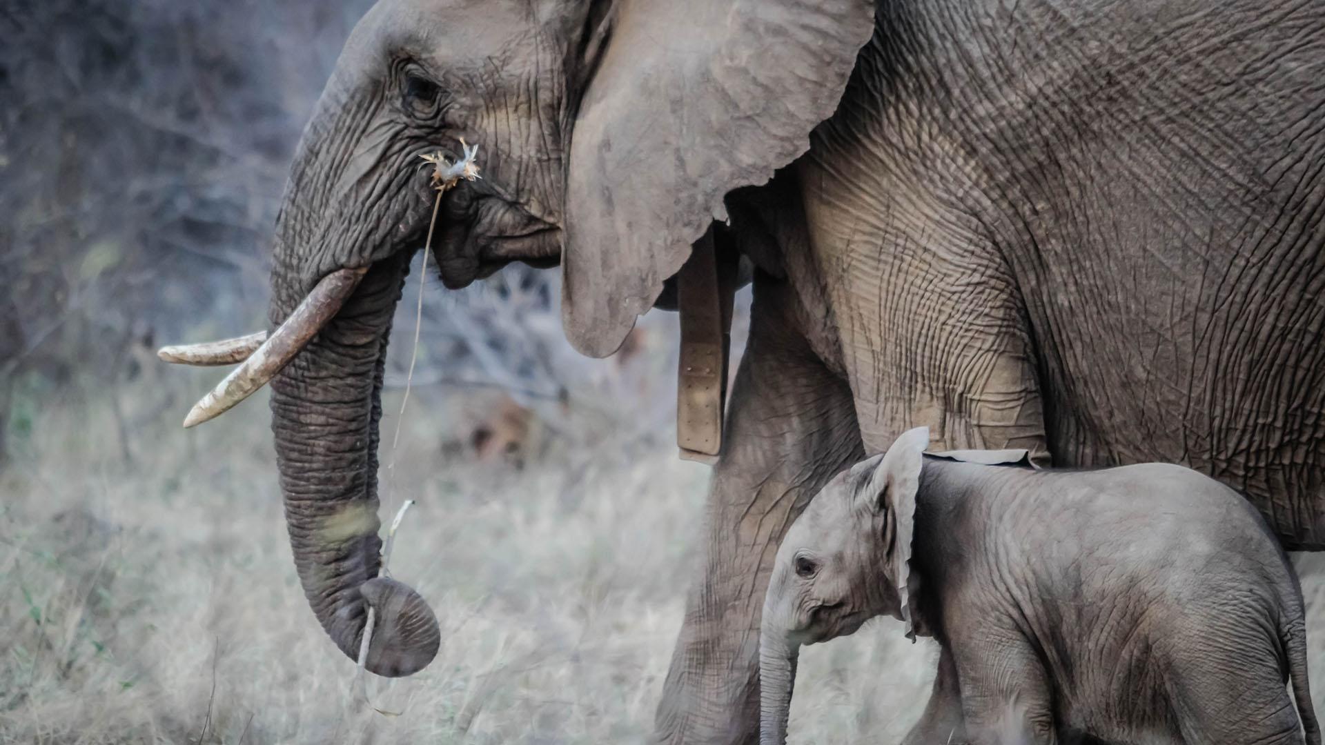 Elefante y su madre. Foto de Casey Allen / Unsplash
