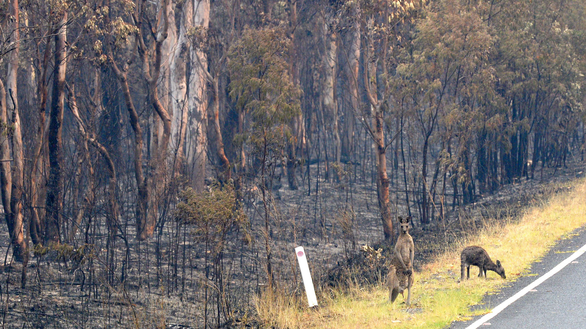 Vida silvestre que sobrevivió a incendios forestales, en el Parque Nacional Wollemi, Australia. Foto de EFE