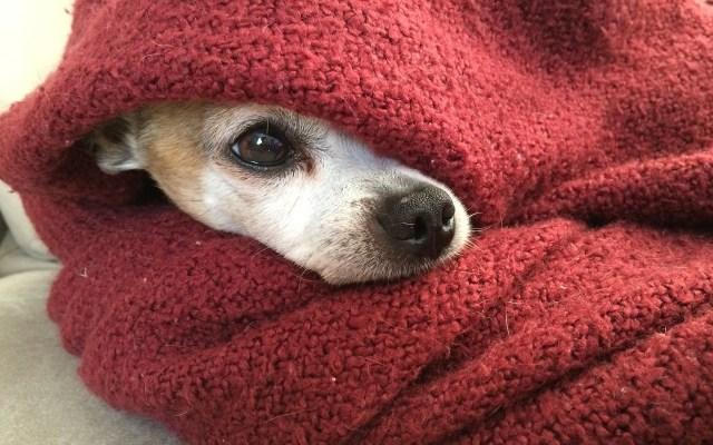Consejos para proteger a su perro en esta época de frío - Foto de Pixabay.