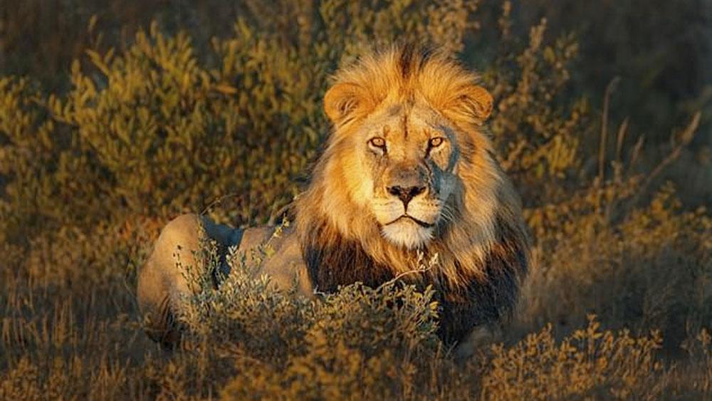 León mata a una persona en alrededores de parque en Nairobi - León mata a persona en alrededores de parque de Nairobi
