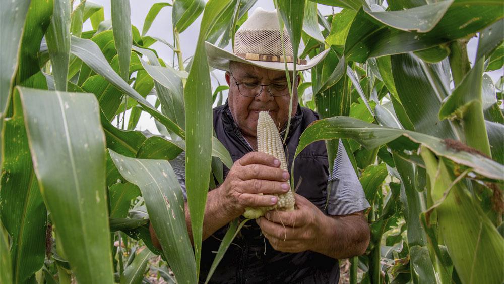 AMLO afirma que se buscará la autosuficiencia en producción de leche y maíz - AMLO afirma que se buscará la autosuficiencia en producción de leche y maíz