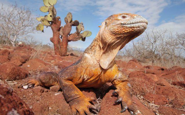 Busca descendientes de especies extintas en las islas Galápagos - Foto de Andrés Medina en Unsplash. (Archivo)