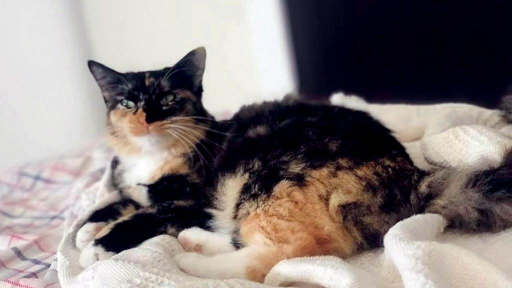 Gatos tienen un parásito que reduce miedo y ansiedad en ratones: estudio - Foto de López-Dóriga Digital