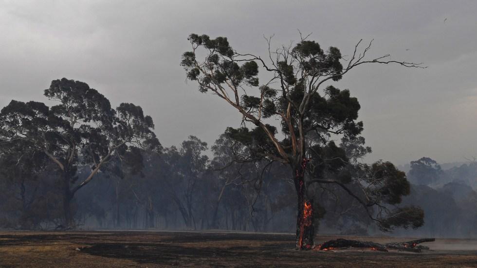 Sube a 16 número de víctimas por incendios en Australia - Incendio en Australia. Foto de EFE