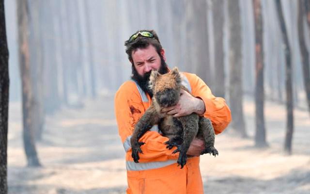 Ocho asociaciones a las que puedes donar para combatir los incendios en Australia - Bombero rescata a koala de incendio en Australia. Foto de EFE