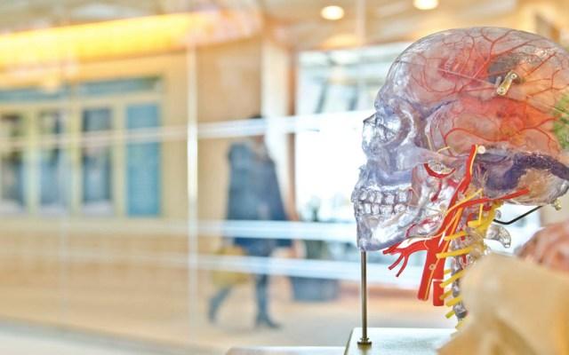 Vasos sanguíneos de mujeres envejecen más rápido que en los hombres - Venas cuerpo humano salud