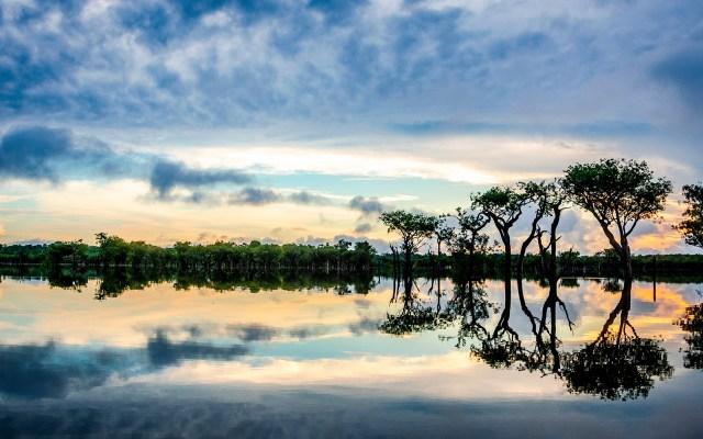 Árboles son las 'cápsulas del tiempo' de la Amazonía, revela estudio - Foto de Sébastien Goldberg / Unsplash