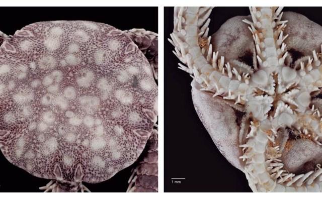 Hallan nueva especie marina cavernícola en cueva de Cozumel - Nueva especie cavernícola Cozumel