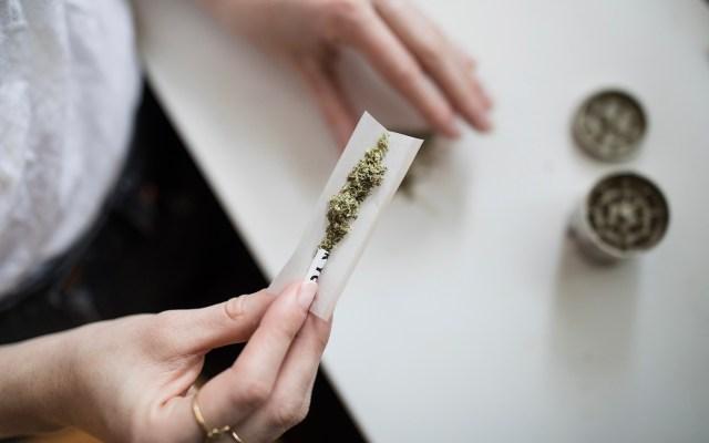 Senadores permitirían posesión de hasta 28 gramos de cannabis por persona - Mujer en posesión de cannabis para uso personal. Foto de Catálogo de Pensamiento / Unsplash