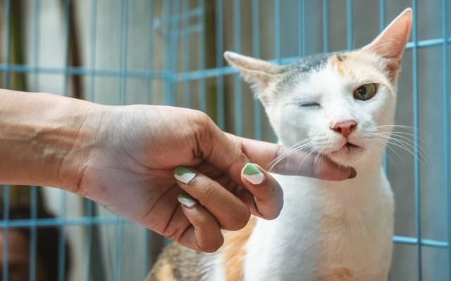 Sader emite recomendaciones para detectar COVID-19 en animales - Animal gato jaula veterinario