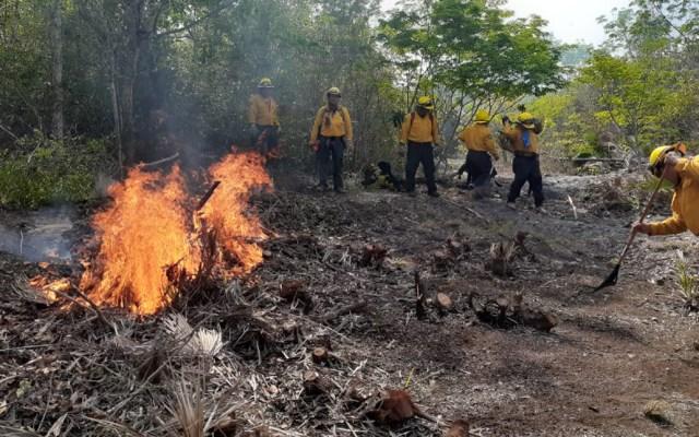 Suman 63 incendios forestales activos en México - Combate de incendio en Chiapas. Foto de @CONAFOR