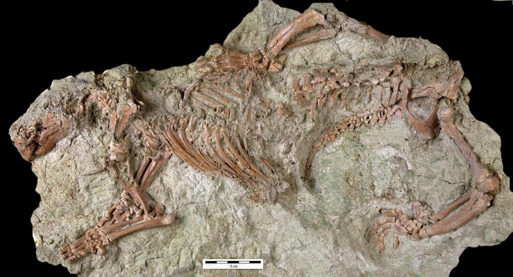 Descubren restos de 'bestia loca', un mamífero de 66 millones de años de antigüedad - Foto de EFE